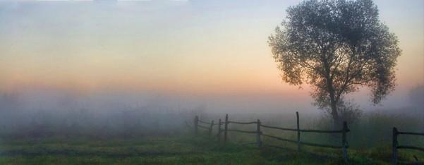 New life breaks at dawn.
